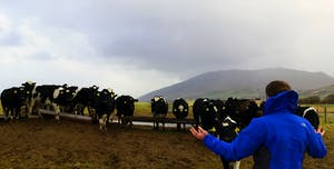 a man in a blue jacket standing in front of a bunch of cows in ireland