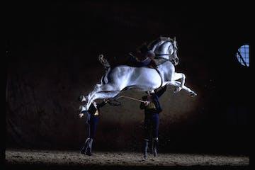 Espectáculo con caballos