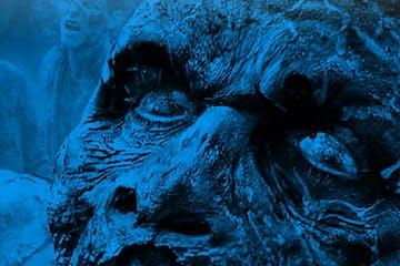 skull close up