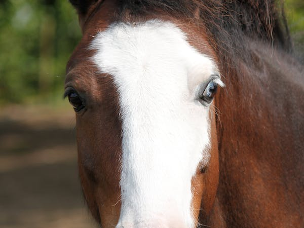 a close up of a horse that is looking at the camera