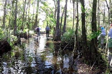 a group of people walking through cypress swamp