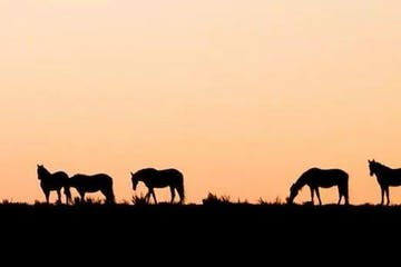 horses standing on top of a grass covered field at dawn