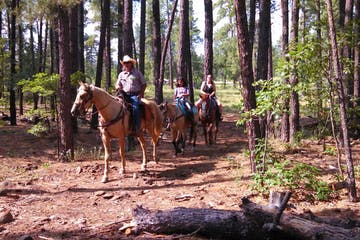 group of people riding horses in a forest