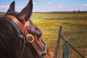a brown horse in a field