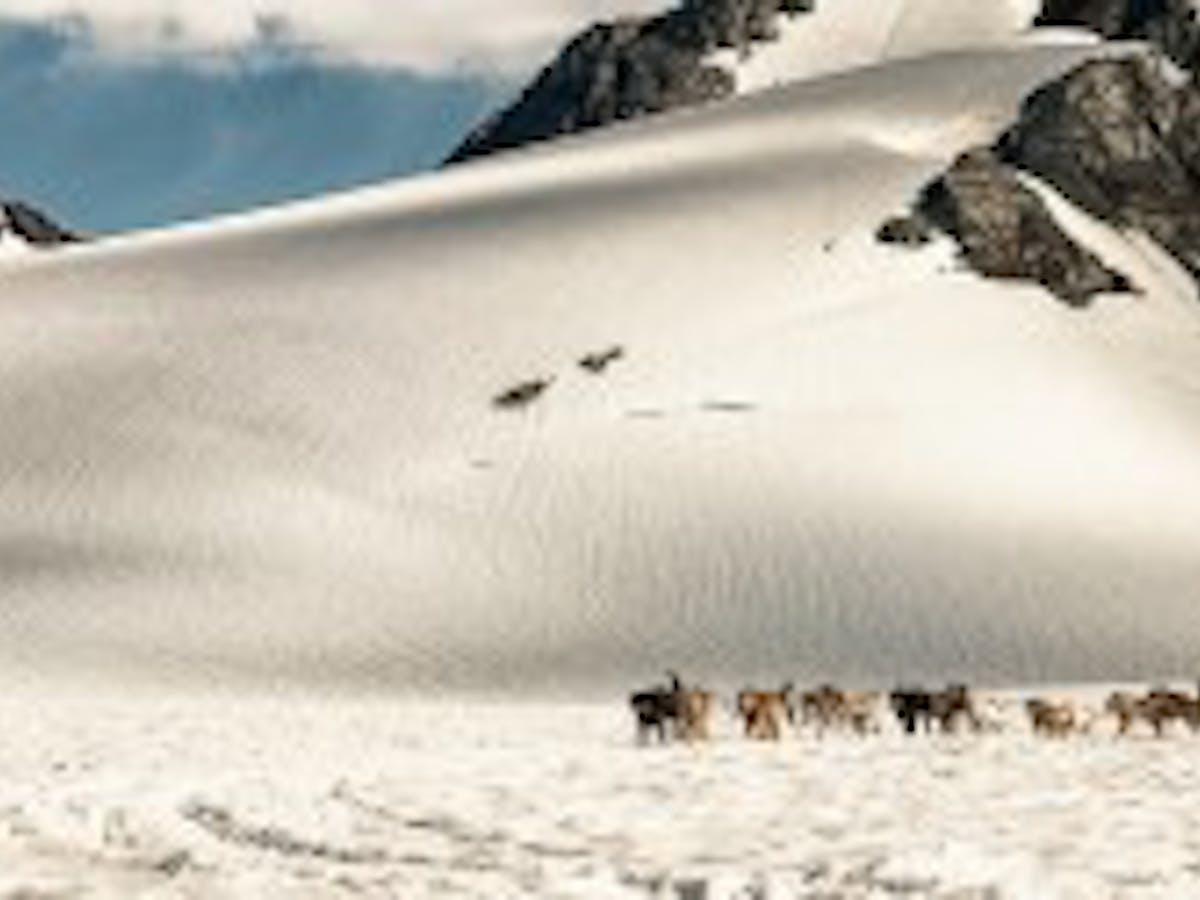 Glacier Dog Sledding - Seward Helicopters
