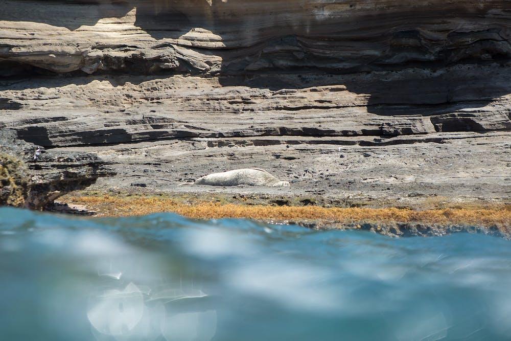 Monk Seal population