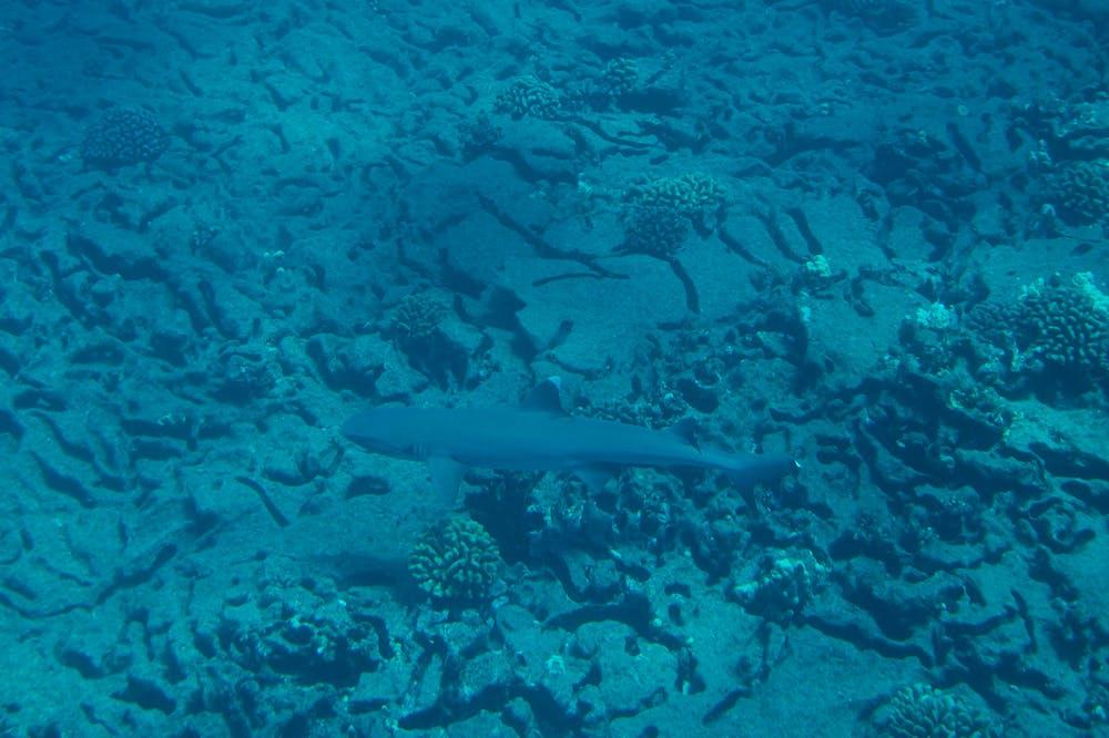 Sharks on Kauai