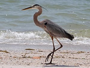 a bird standing on a beach