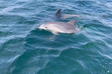 Dolphins on A Frisky Stop