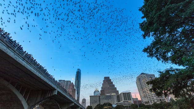 A photo of the Congress Ave Bat Bridge Kayak Tour in Austin, Texas