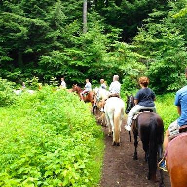 Horseback riding into the woods
