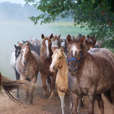 Pack of horses trotting on Rainbow Ranch