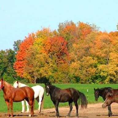 Horses grazing on Rainbow Ranch