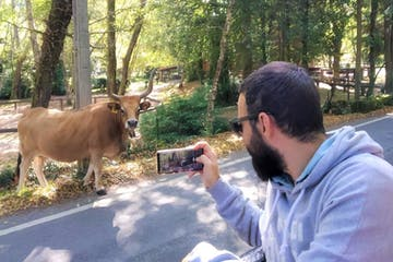 a man standing next to a cow