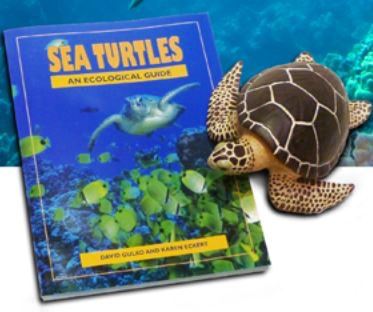 pacific-whale-adopt-a-turtle