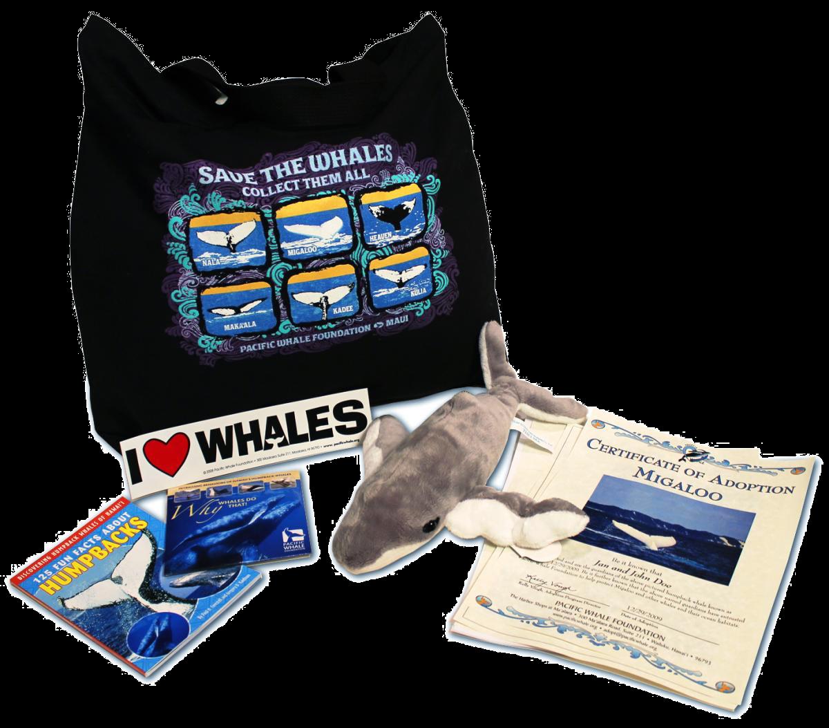 pacific-whale-adopt-a-whale