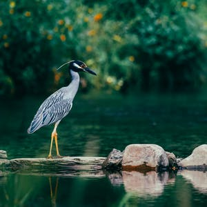 a bird sitting on a rock next to a body of water