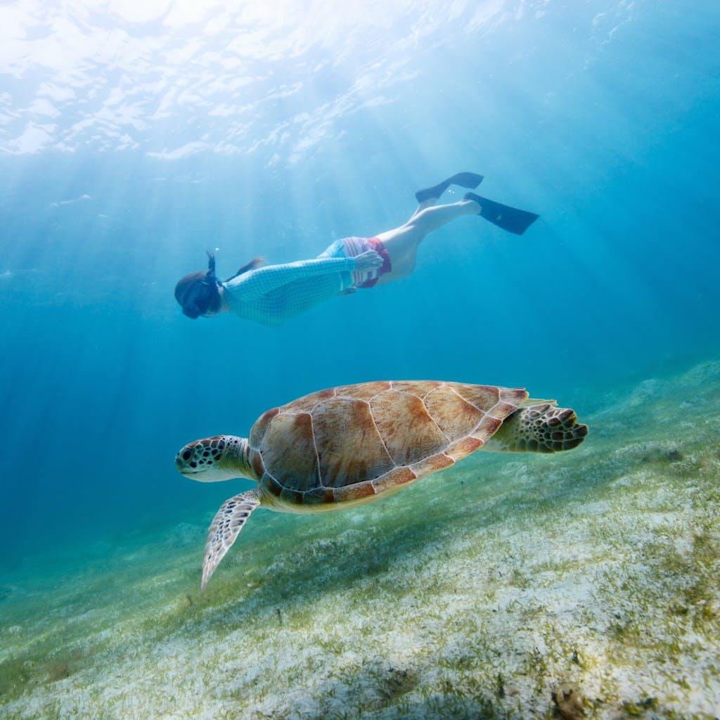 snorkeling with sea turtles St. John VI