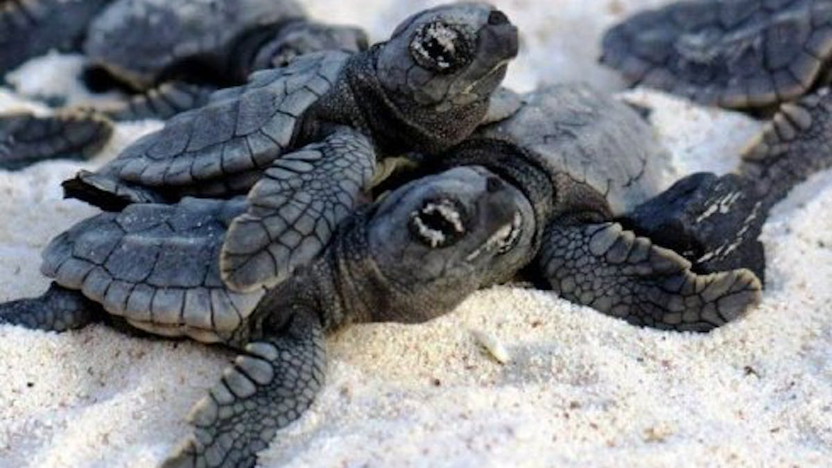 turtles lying in the sand