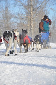 a group of people and a dog in the snow
