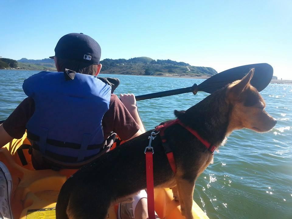 dog kayak travel