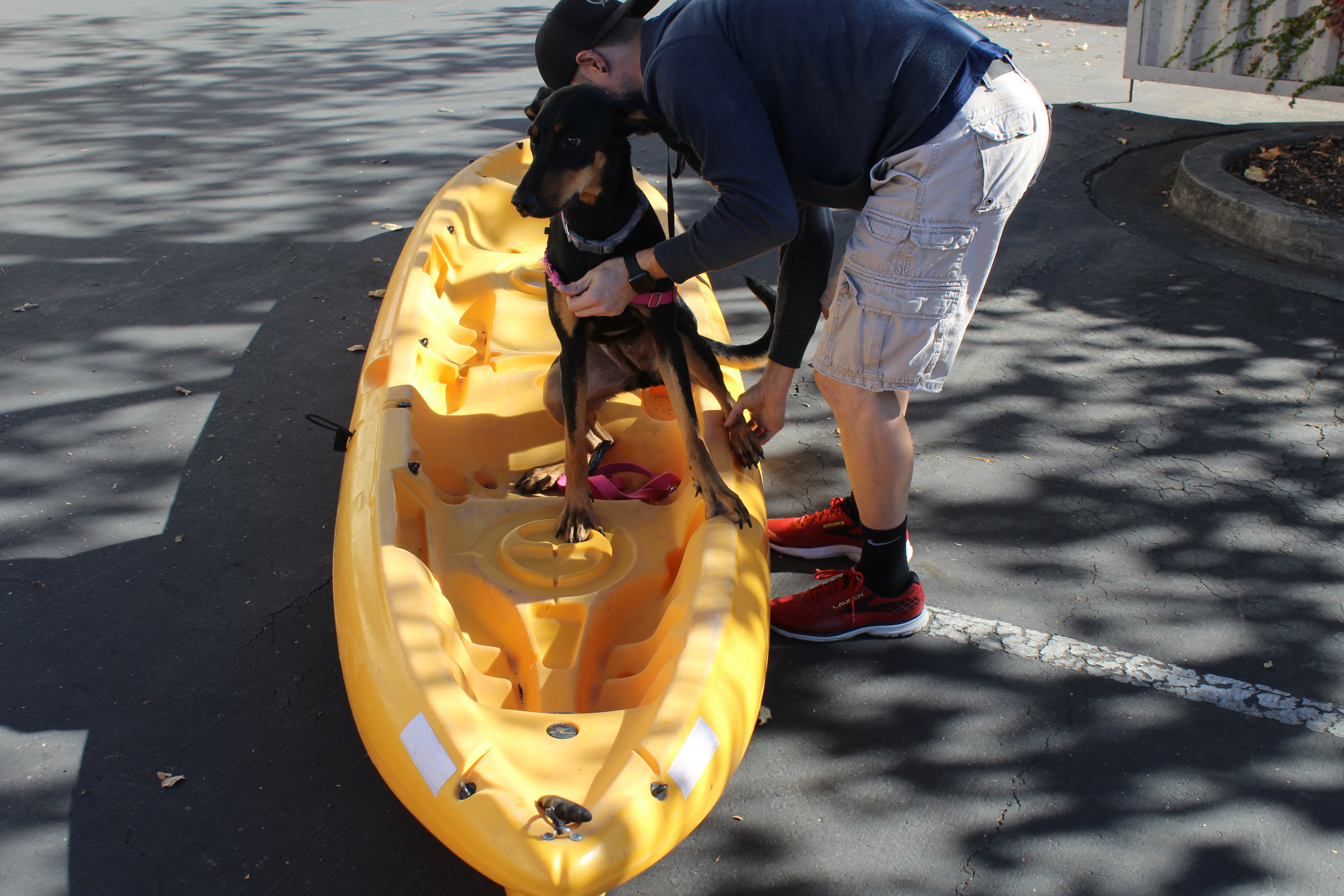 dog unsure about kayak