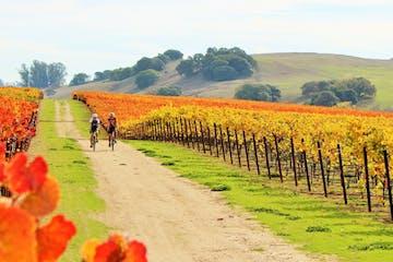 people walking through a vineyard