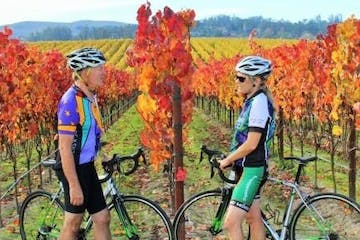 cyclists in vineyard