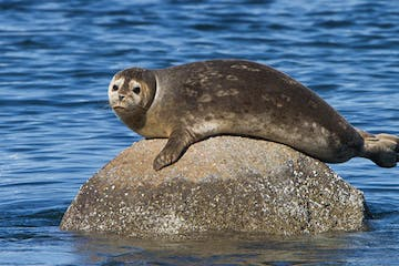a seal swimming in a body of water