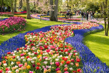 a colorful flower garden with Keukenhof in the background