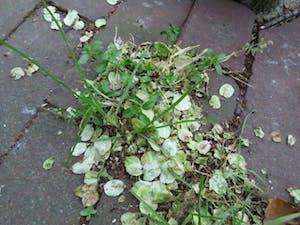 a plant in a garden