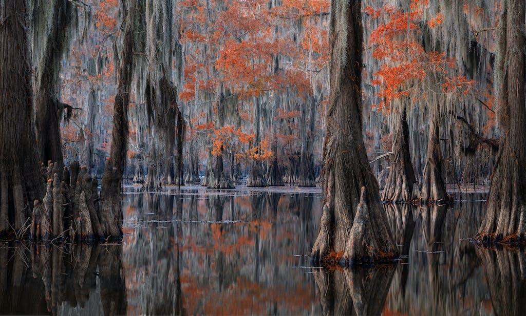 cypress, cypress swamp, cypress swamp photography, swamp photography, louisiana photography