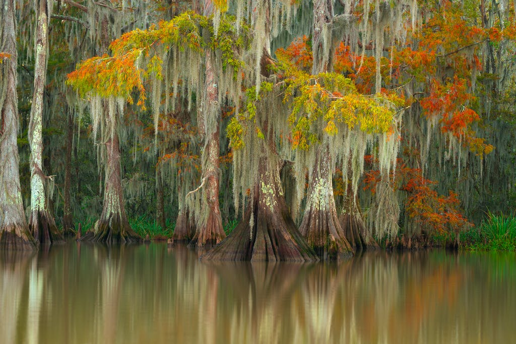 cypress fall colors