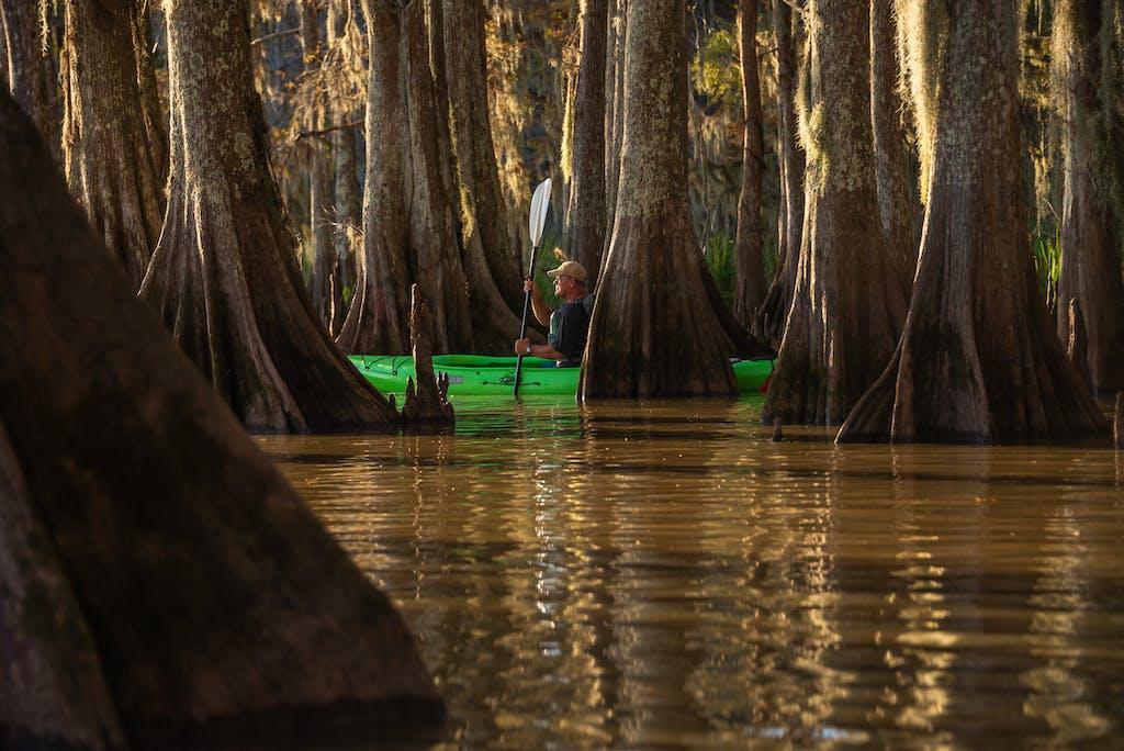 cypress swamp kayak photo tour