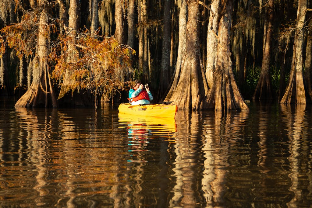 shooting photography in a cypress swamp