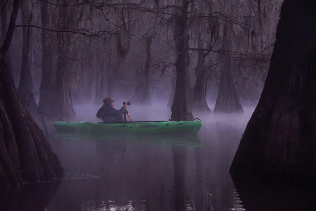 foggy cypress morning