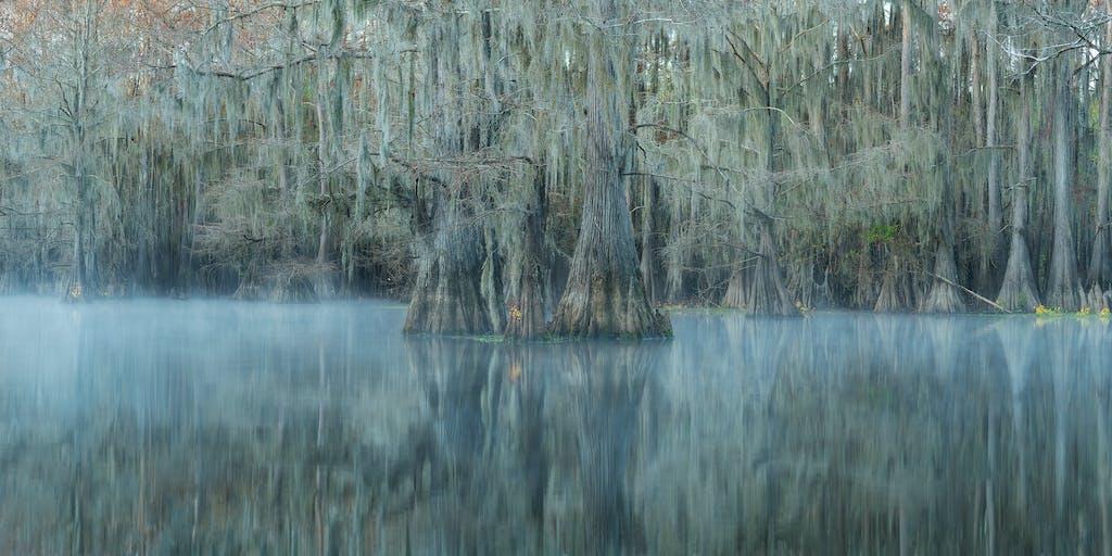 cypress morning fog