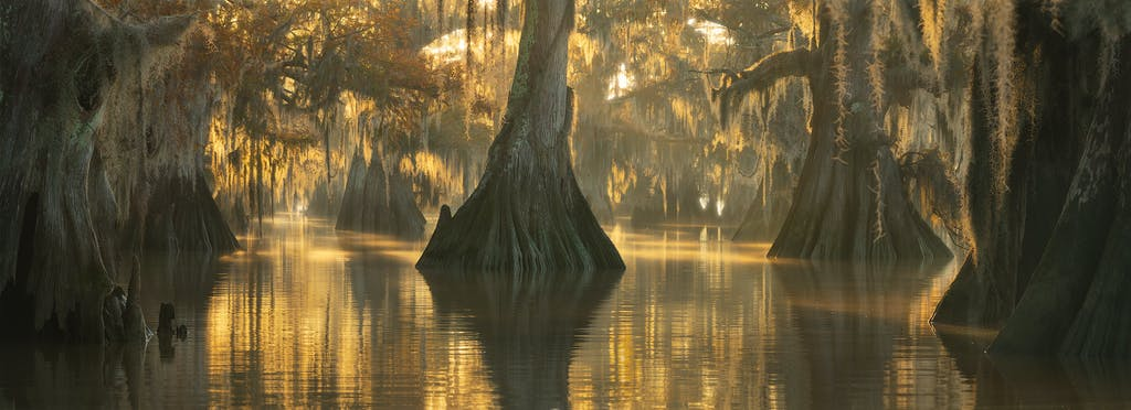 cypress swamp landscape photography