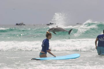 a person and a dolphin riding a wave on a surfboard in the ocean