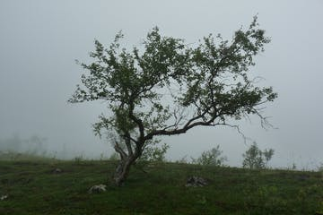 a herd of sheep standing on top of a tree