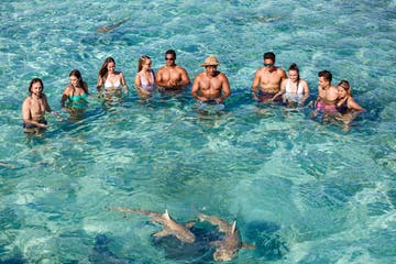 A group of people swimming with sharks in Bora Bora lagoon