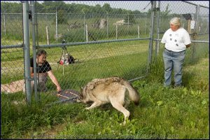 a man and a dog in a fenced in area