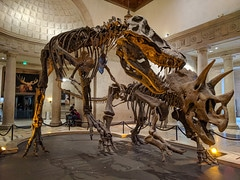 los Angeles county natural history museum photo