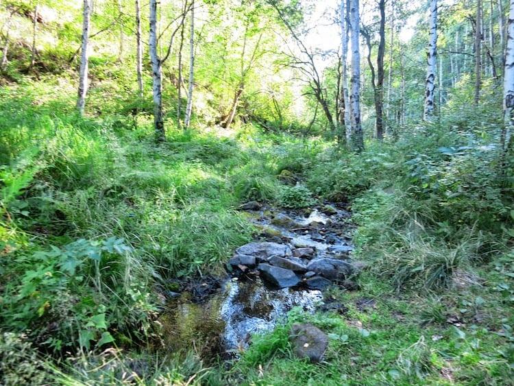 Listvaynka nature