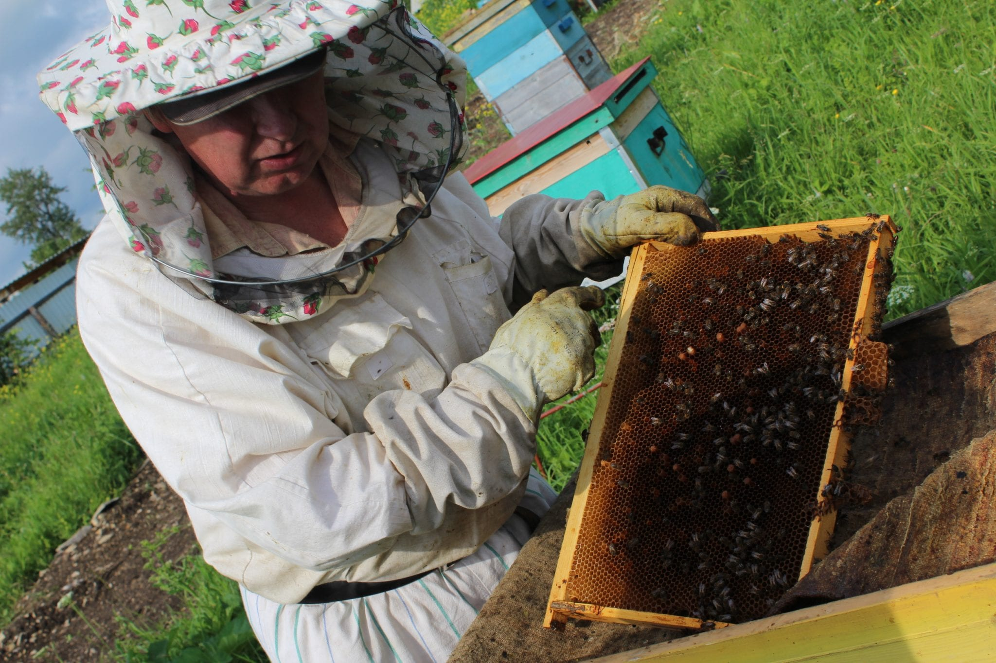 Sustainable practice - local honey factory