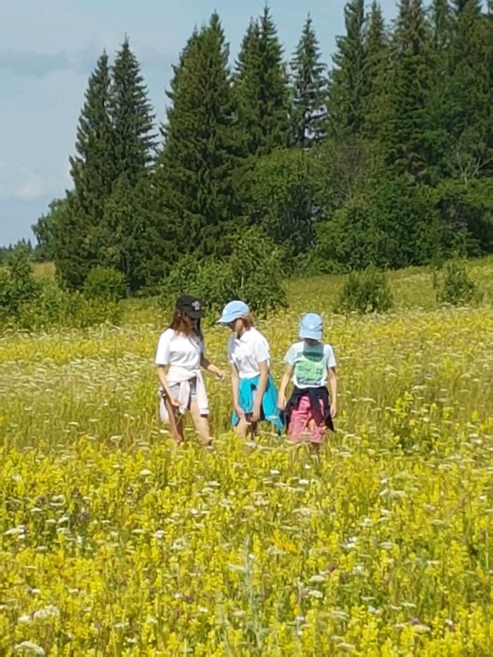 Trans-Siberian Railway trip experience. Summer field.