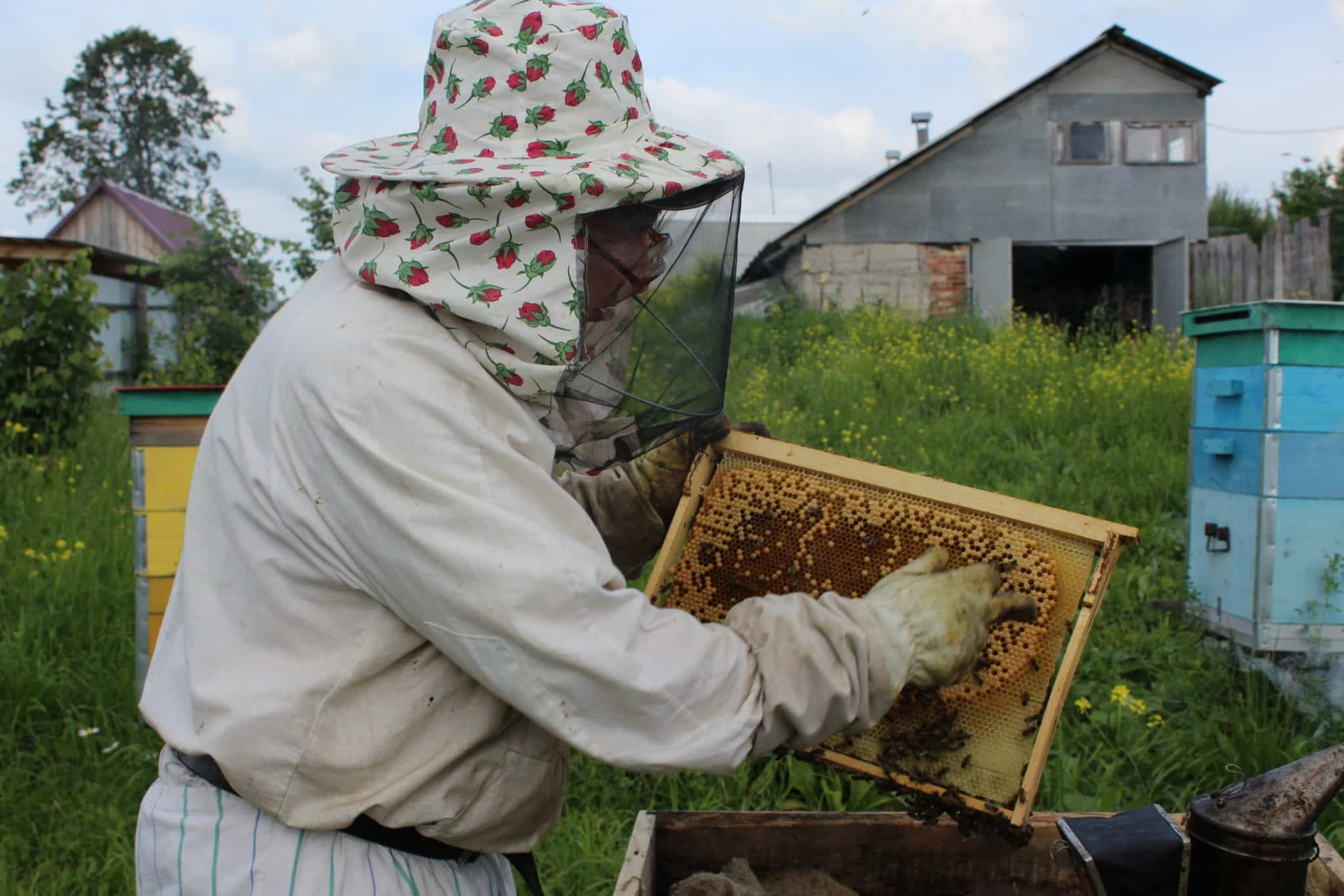 Honey factory in Russian village