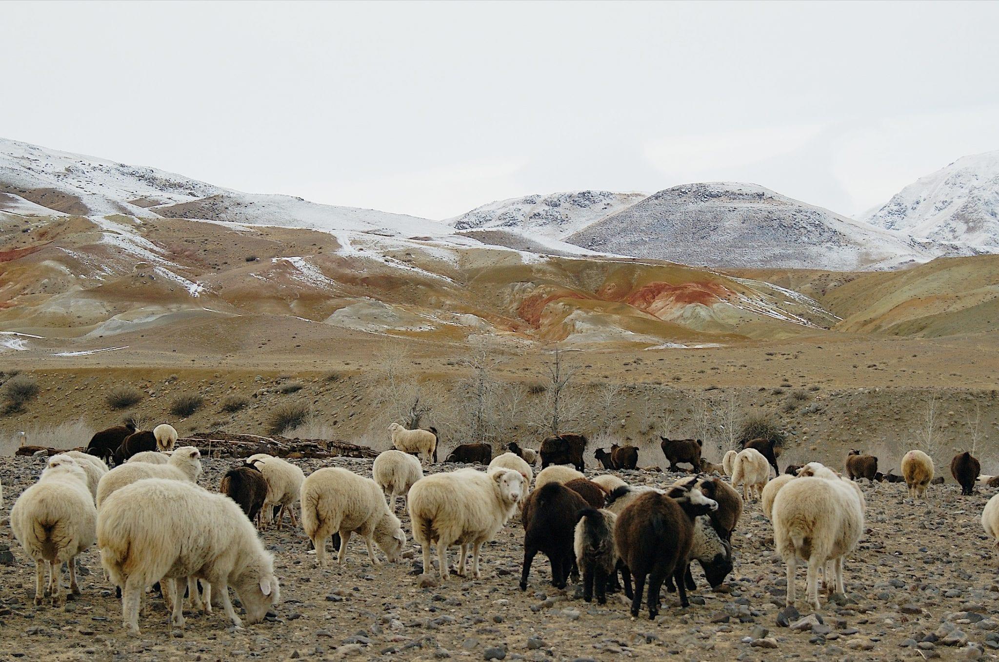 Altai Steppe