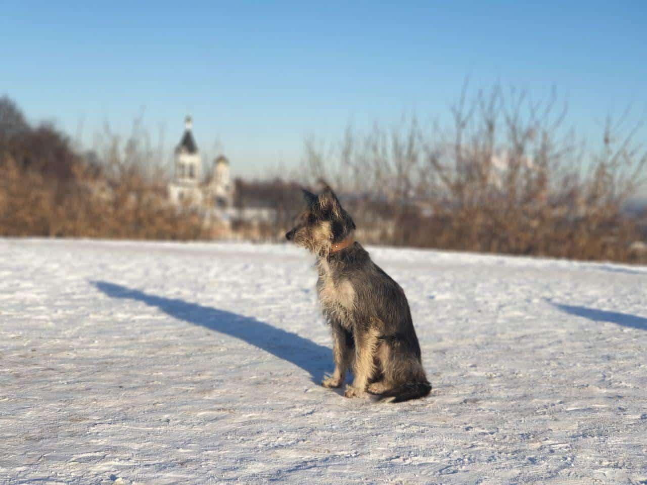 Dog in Vladimir
