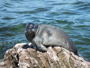 a seal on a rock next to a body of water